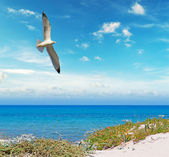 Voando sobre a Sardenha — Fotografia Stock