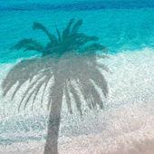 Palm skugga — Stockfoto