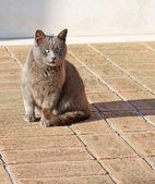 Cat on the floor — Stock Photo