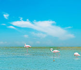 Pink flamingos under a blue sky — Stock Photo
