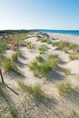 Dunes with plants — Stock Photo