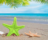 Palm over a green starfish — Stock Photo
