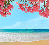 Oleanders and sand — Stock Photo