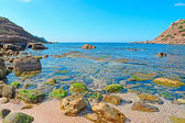 Rocks and seaweeds — Stock Photo