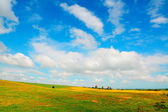 Yellow and green meadow — Stock Photo