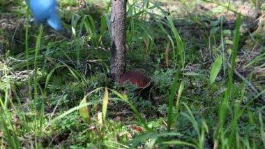 Large mushroom — Stock Video