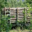 Freight train with lumber - Stock Photo
