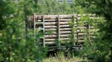 Freight train with lumber — Stock Video