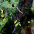 Stockvideo: Leaves swirling
