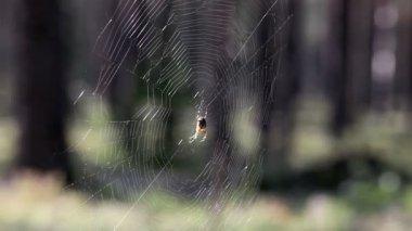 Spider-web — Stock Video