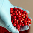 Stock Photo: Red bilberry in hand