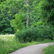 Forest road — Stock Photo #13755955