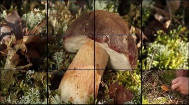 Mushrooms and berries montage — Stock Video