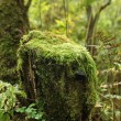 Foto Stock: Moss covered