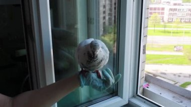 Feeding of pigeon — Stock Video