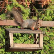 Squirrel — Stock Video #34594991