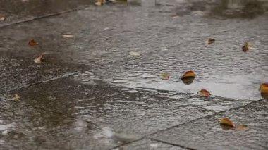 Höstens regn — Stockvideo