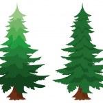 Two evergreen fir trees — Stock Vector