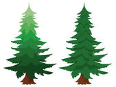 Two evergreen fir trees — Stock Vector