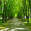 Beautiful park with many green trees — Stock Photo #12703221