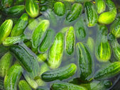 Cucumbers prepare for preservation — Stock Photo