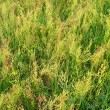 Thrickets of a high green grass — Stock Photo