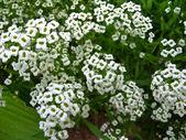 Yatağın üstüne beyaz çiçekler çok — Stok fotoğraf