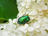 The motley green bug on the white leaves — Stock Photo