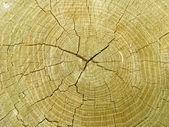 ツリーのカットのパターン — ストック写真