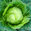 Stock Photo: Big head of cabbage