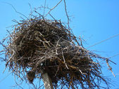 Nest of storks in village — Stock Photo