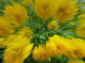 Grön och gul bakgrund — Stockfoto