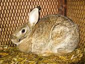 Ницца серый кролик в баре — Стоковое фото