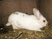 Nice white rabbit in the bar — Stock Photo