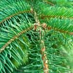 ramos verdes de uma pele jovem-árvore — Foto Stock