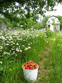 Eimer mit einer erdbeere — Stockfoto