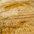 Pattern on a cut of a tree — Stock Photo