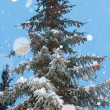 Stock Photo: Harmonous fur-tree with snowflakes