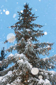 Harmonous fur-tree with snowflakes — Stock Photo