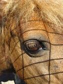 Oko konia — Zdjęcie stockowe