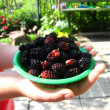 Stock Photo: Ripe berries of mulberry on plate