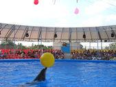 Spettacolo con i delfini nel delfinario — Foto Stock