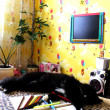 Foto de Stock  : Black tired cat lying on sofafter drawing