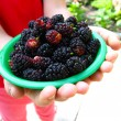 Ripe dark berries of a mulberry on plate — Stock Photo