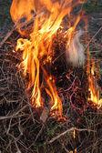 Brand in het bos — Stockfoto
