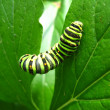 Stock Photo: Caterpillar of butterfly machaon on leaf