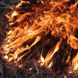 Flame inflaming in the grass — Stock Photo