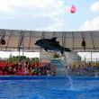 Show with dolphins in delphinariums — Stock Photo