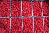 Red berries of raspberry — Stock Photo