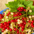 Clusters of berries of red and white currant on the plate — Stock Photo